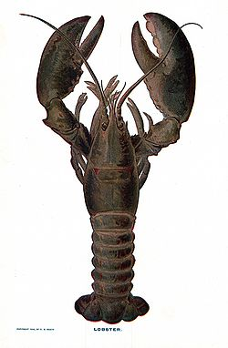 250px-lobster_nsrw