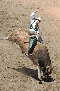 Twelve-Year-Old Boy Dies in Bull Riding Competition « JONATHAN TURLEY