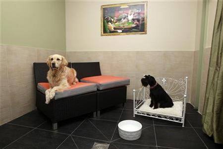Do the rooms come with fire hydrants paris has luxury pet for Pet friendly luxury hotels