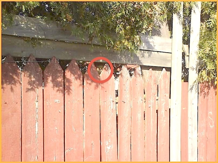found the kitteh in fence