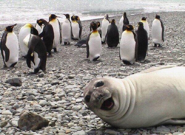 photo bombing seal
