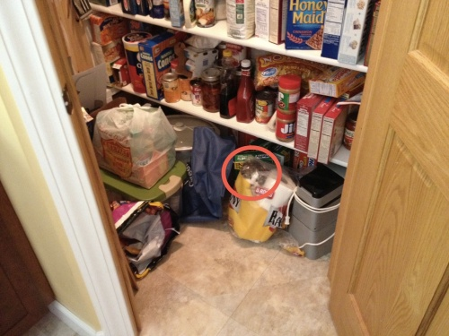 found the kitteh in pantry