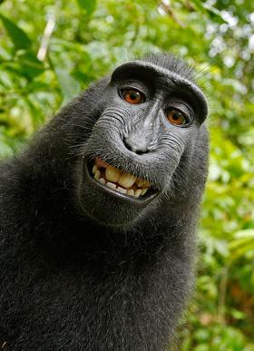monkey_selfie