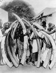 170px-Ivory_trade