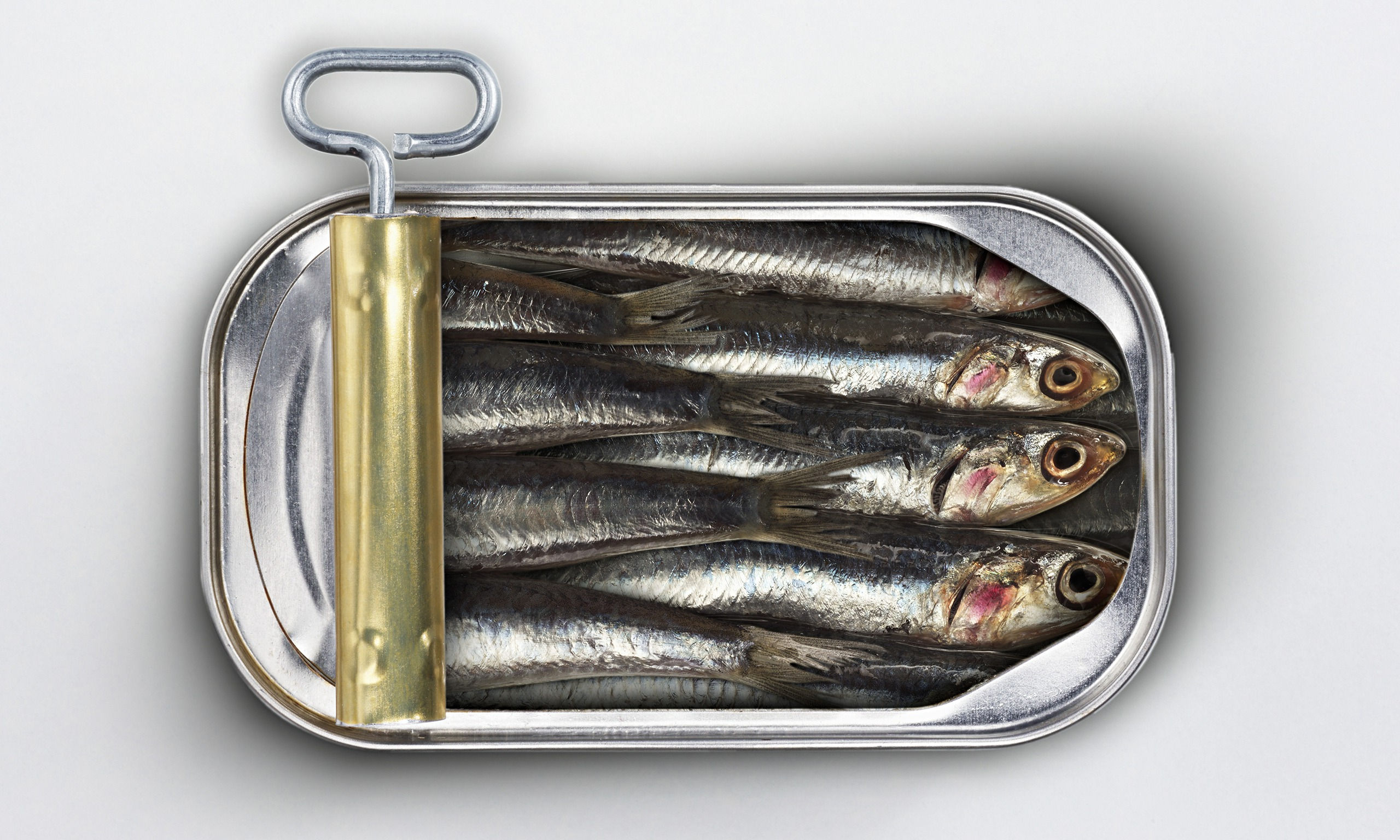 Image result for sardine can