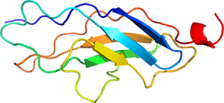 titin-3d-structure