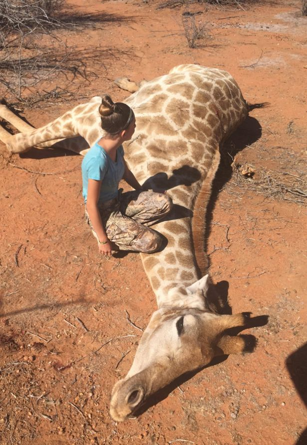 Woman jerk off giraffe
